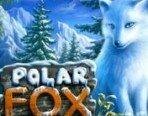 Polar_Fox_180х138
